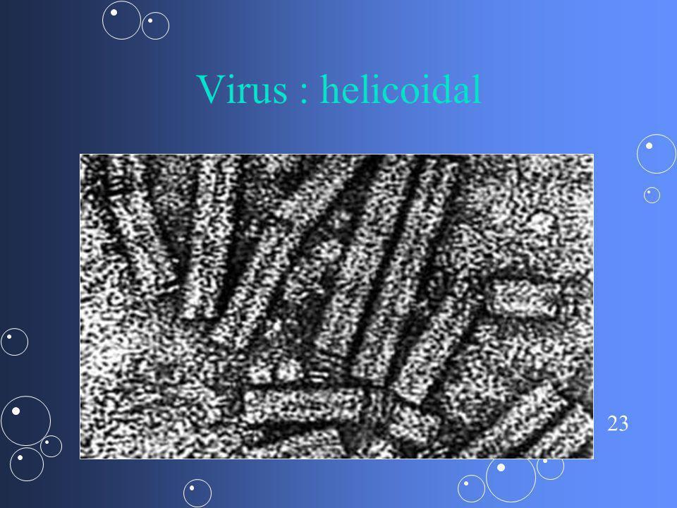 Virus : helicoidal