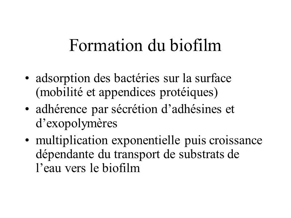 Formation du biofilm adsorption des bactéries sur la surface (mobilité et appendices protéiques)