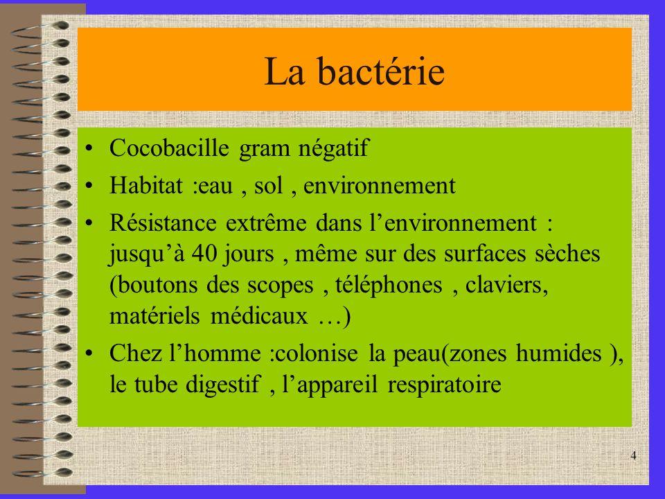 La bactérie Cocobacille gram négatif