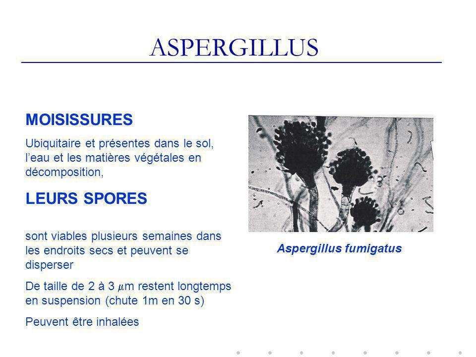 ASPERGILLUS MOISISSURES LEURS SPORES