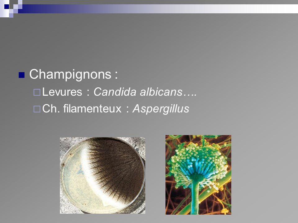 Champignons : Levures : Candida albicans….