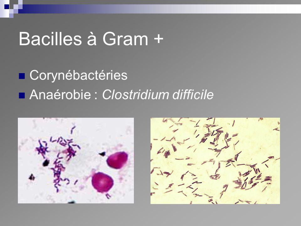 Bacilles à Gram + Corynébactéries Anaérobie : Clostridium difficile