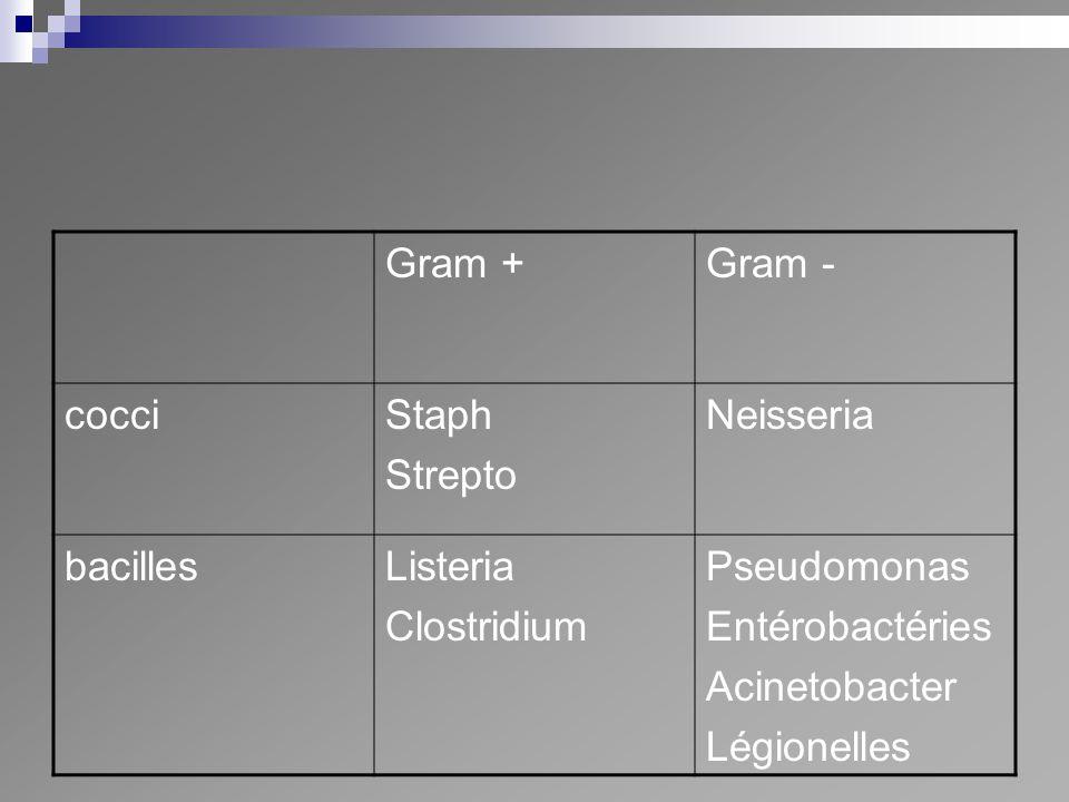 Gram + Gram - cocci. Staph. Strepto. Neisseria. bacilles. Listeria. Clostridium. Pseudomonas.