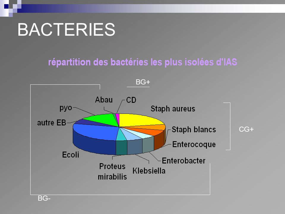 BACTERIES BG+ CG+ BG-