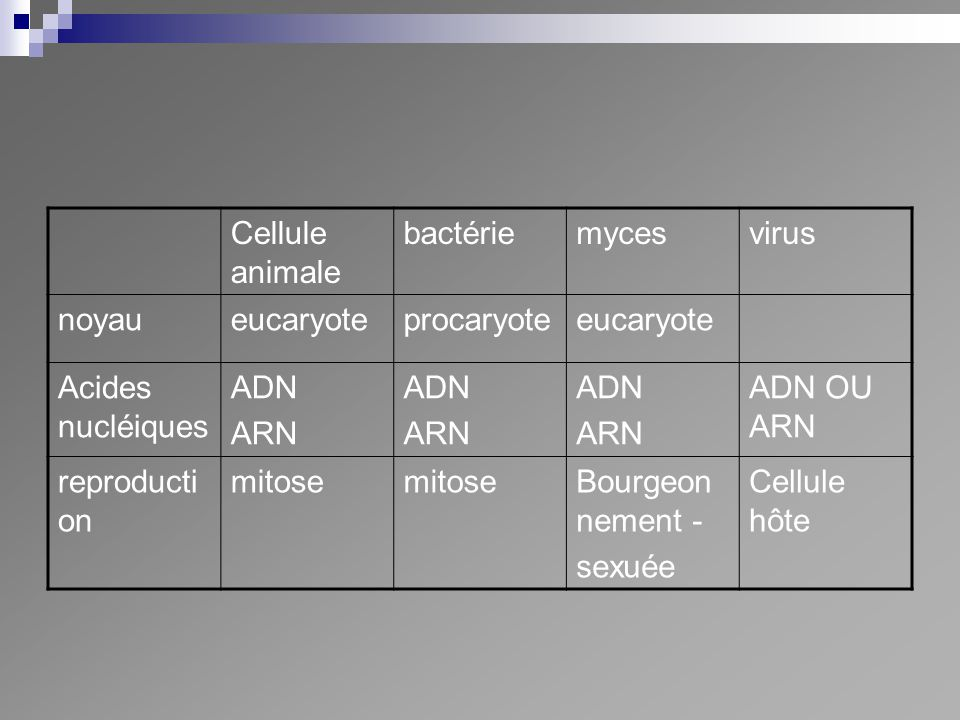Cellule animale bactérie. myces. virus. noyau. eucaryote. procaryote. Acides nucléiques. ADN.