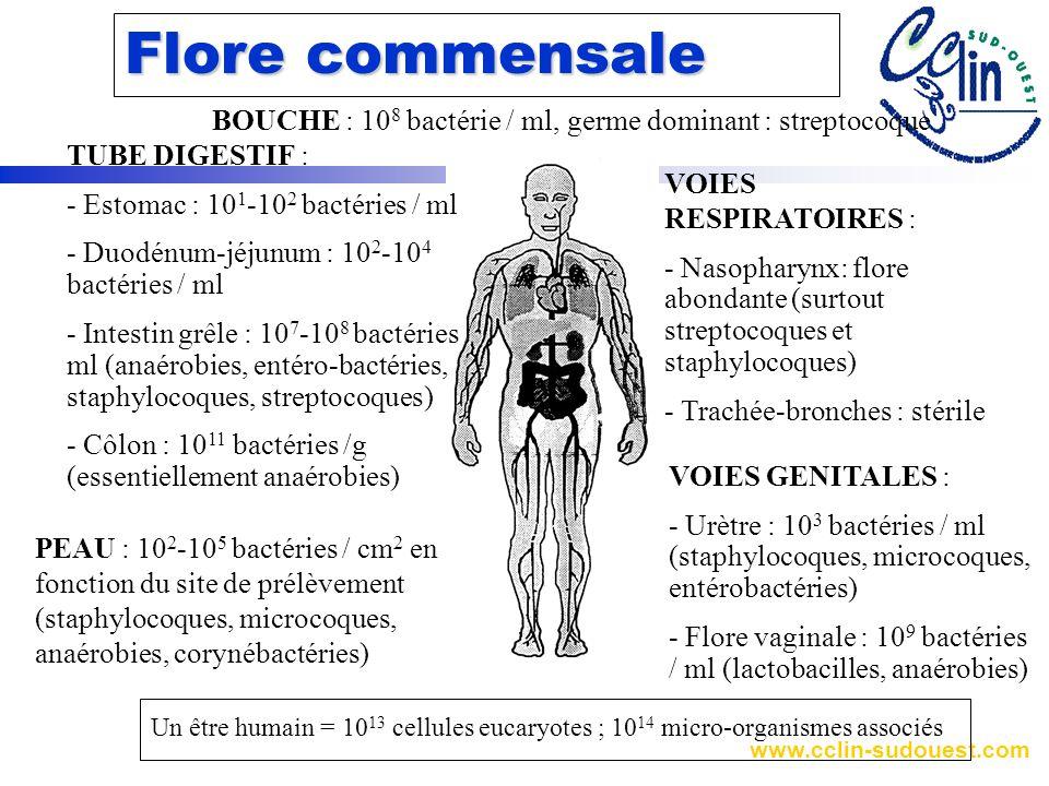 Flore commensale BOUCHE : 108 bactérie / ml, germe dominant : streptocoque. TUBE DIGESTIF : - Estomac : 101-102 bactéries / ml.