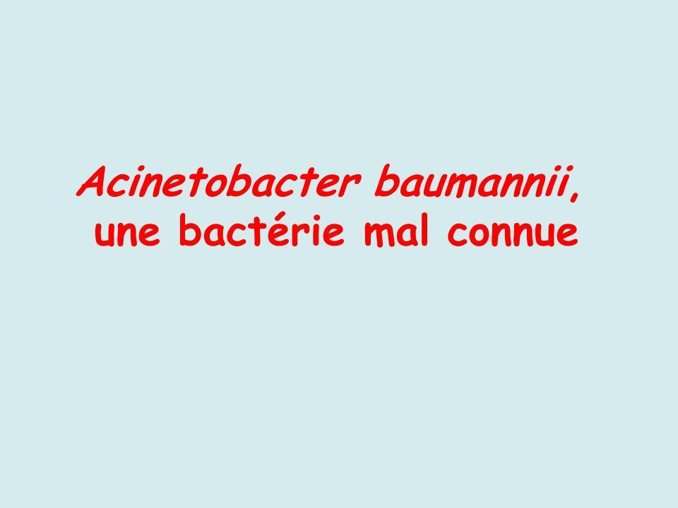 Acinetobacter baumannii, une bactérie mal connue