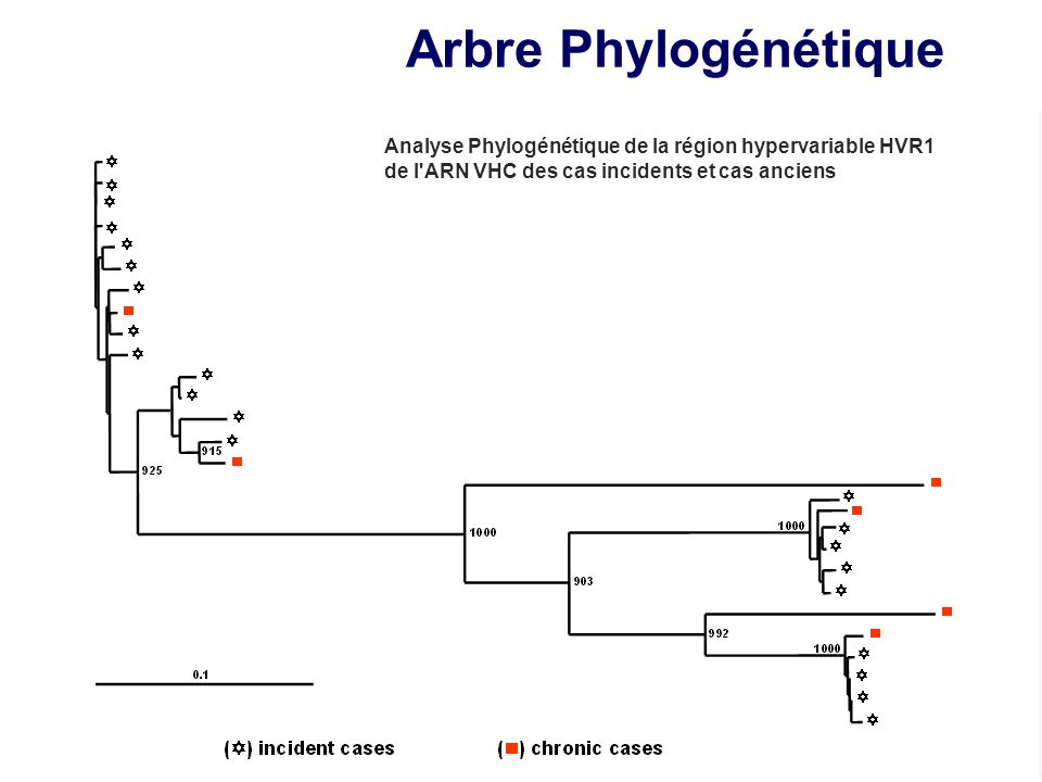 Arbre Phylogénétique Analyse Phylogénétique de la région hypervariable HVR1.