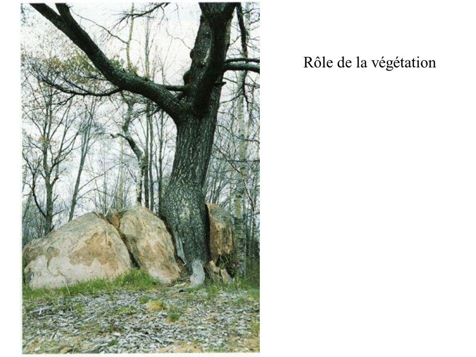 Rôle de la végétation