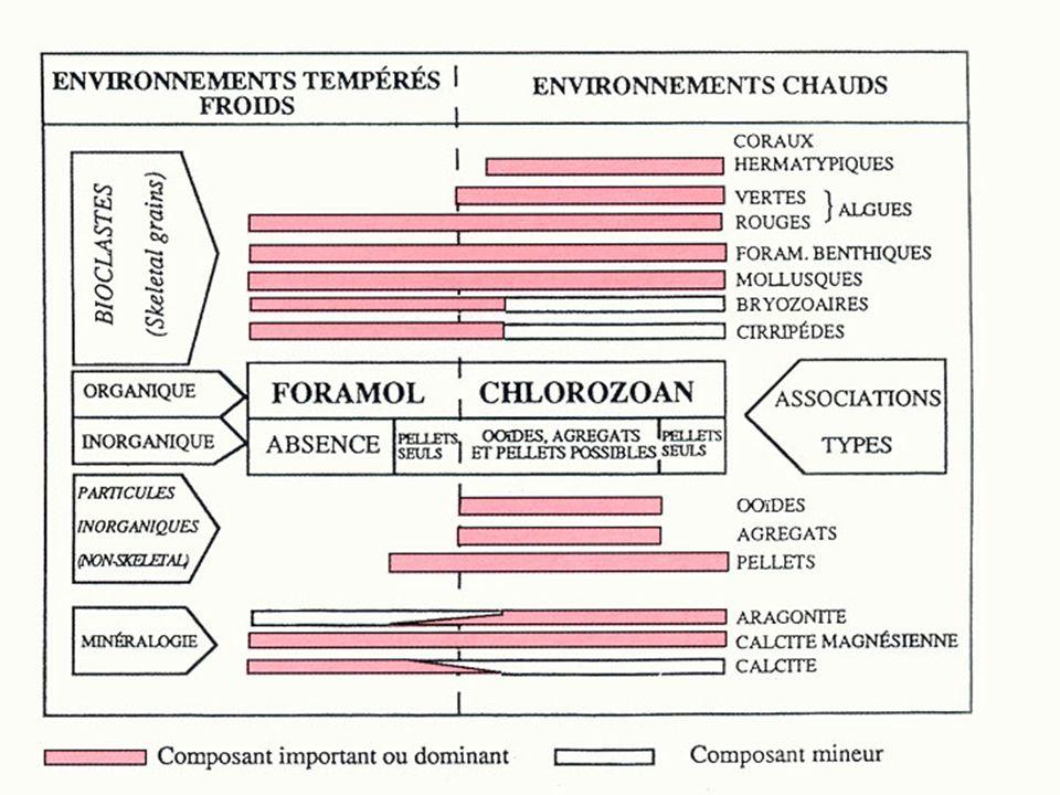 Foramol et Chlorozoan