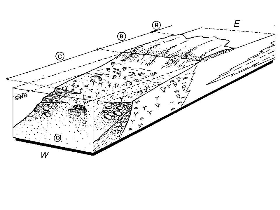 Milieu récifal du Carbonifère