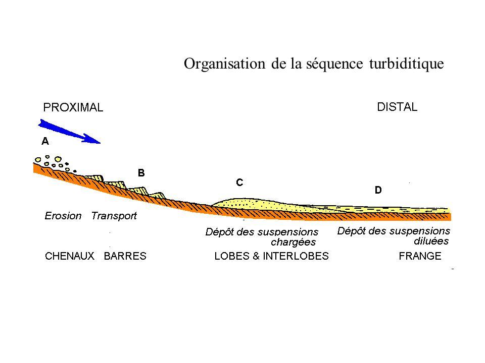 Organisation de la séquence turbiditique