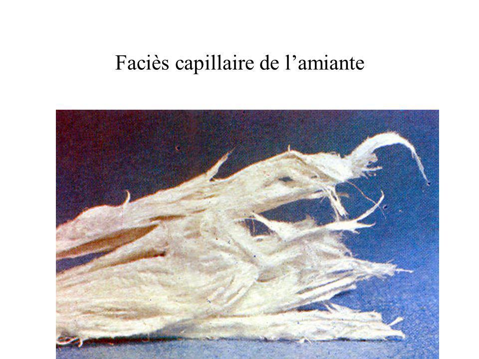 Faciès capillaire de l'amiante