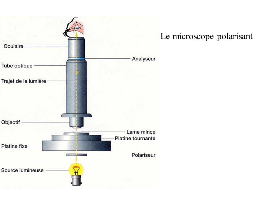 Le microscope polarisant