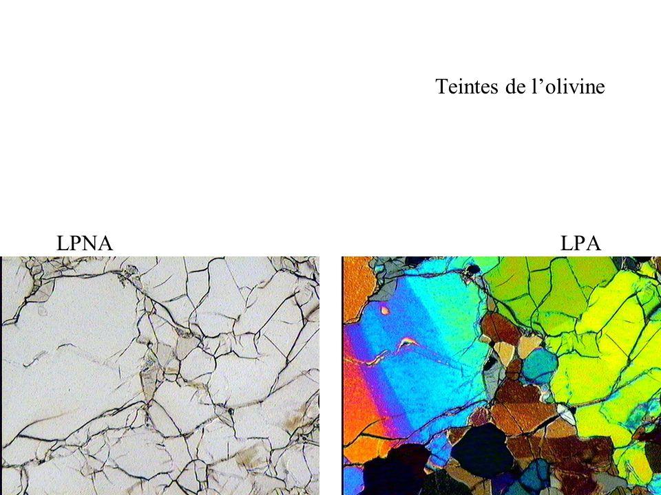 Teintes de l'olivine LPNA LPA.