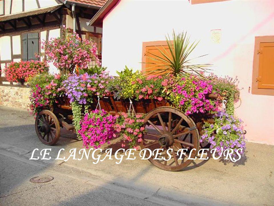 le langage des fleurs ppt t l charger. Black Bedroom Furniture Sets. Home Design Ideas