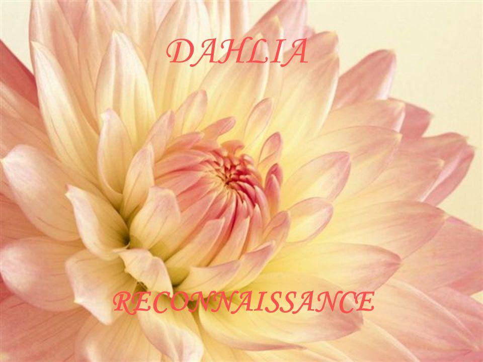 DAHLIA RECONNAISSANCE