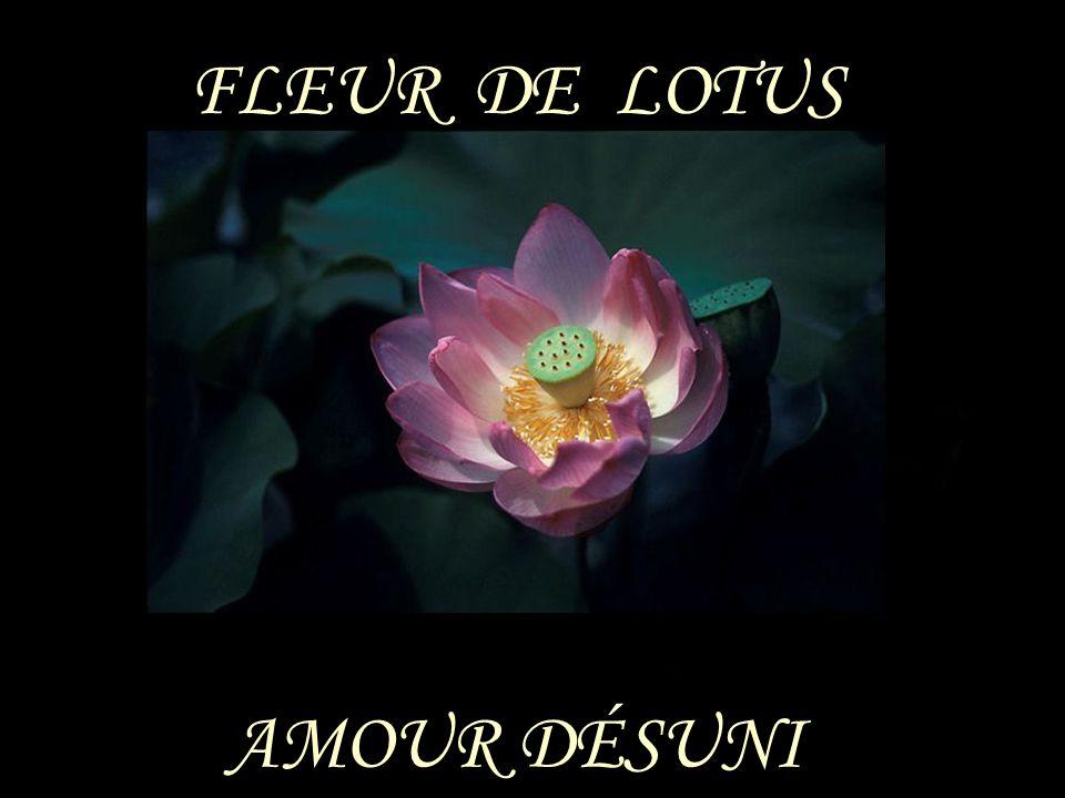 FLEUR DE LOTUS AMOUR DÉSUNI