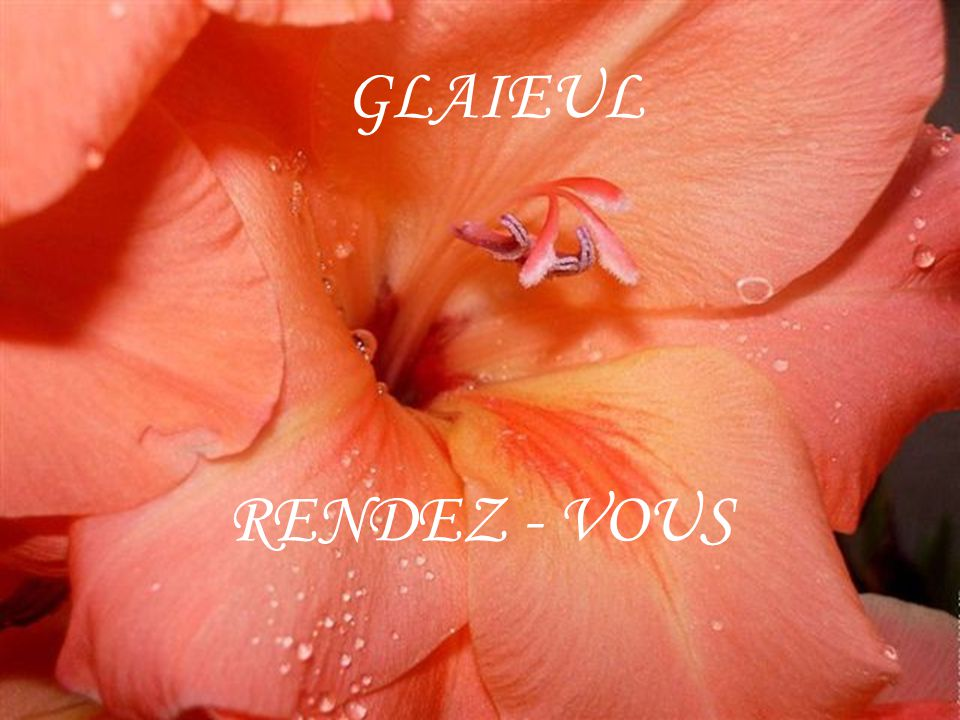 GLAIEUL RENDEZ - VOUS
