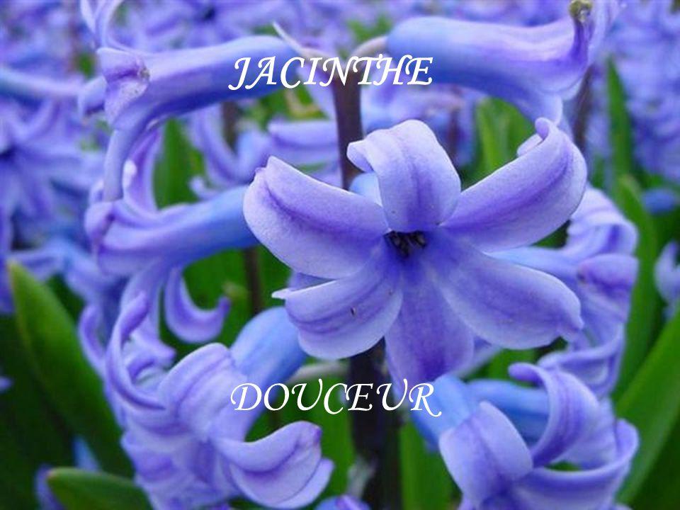 JACINTHE DOUCEUR