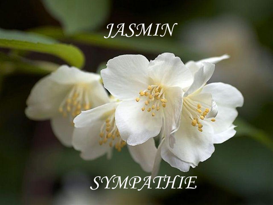 JASMIN SYMPATHIE