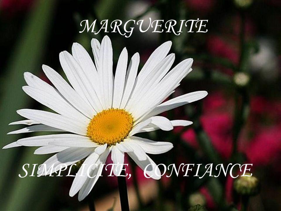 MARGUERITE SIMPLICITE, CONFIANCE