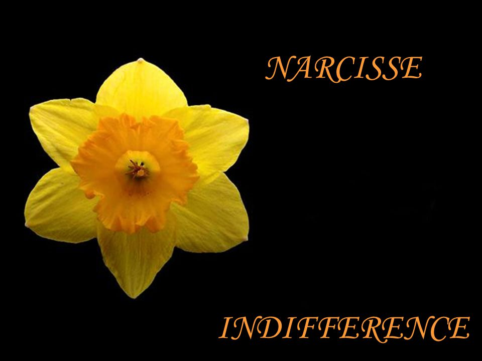 NARCISSE INDIFFERENCE