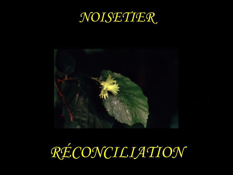 NOISETIER RÉCONCILIATION