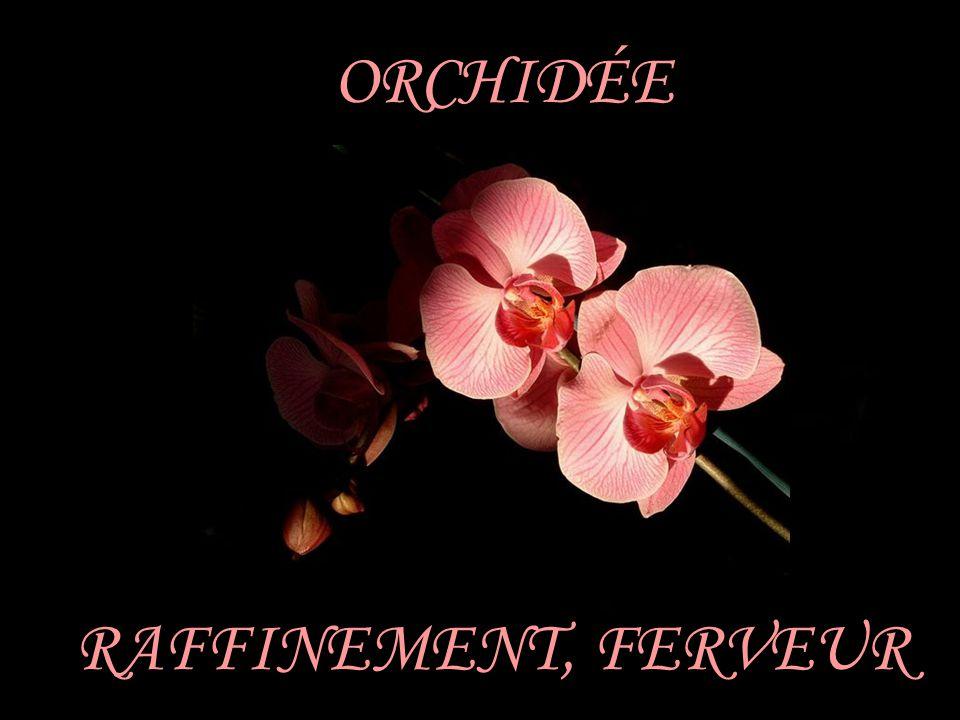 ORCHIDÉE RAFFINEMENT, FERVEUR