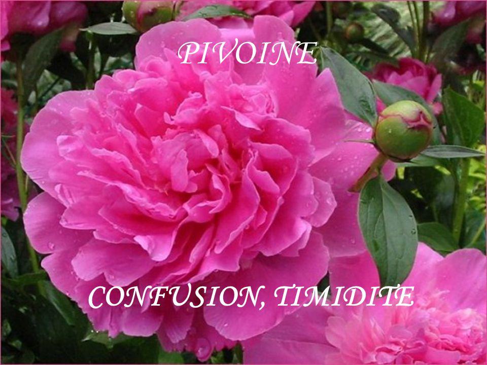 PIVOINE CONFUSION, TIMIDITE
