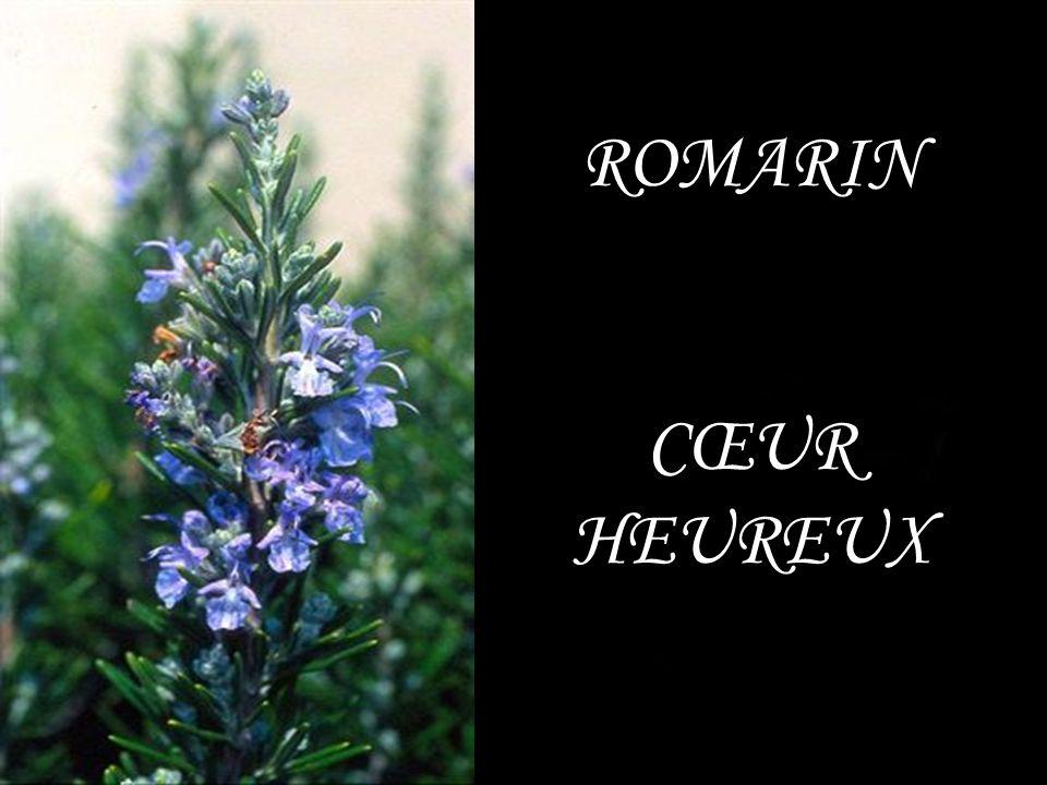 ROMARIN CŒUR HEUREUX