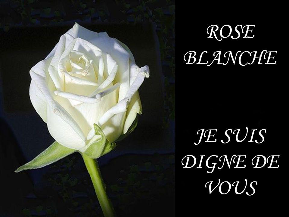 ROSE BLANCHE JE SUIS DIGNE DE VOUS
