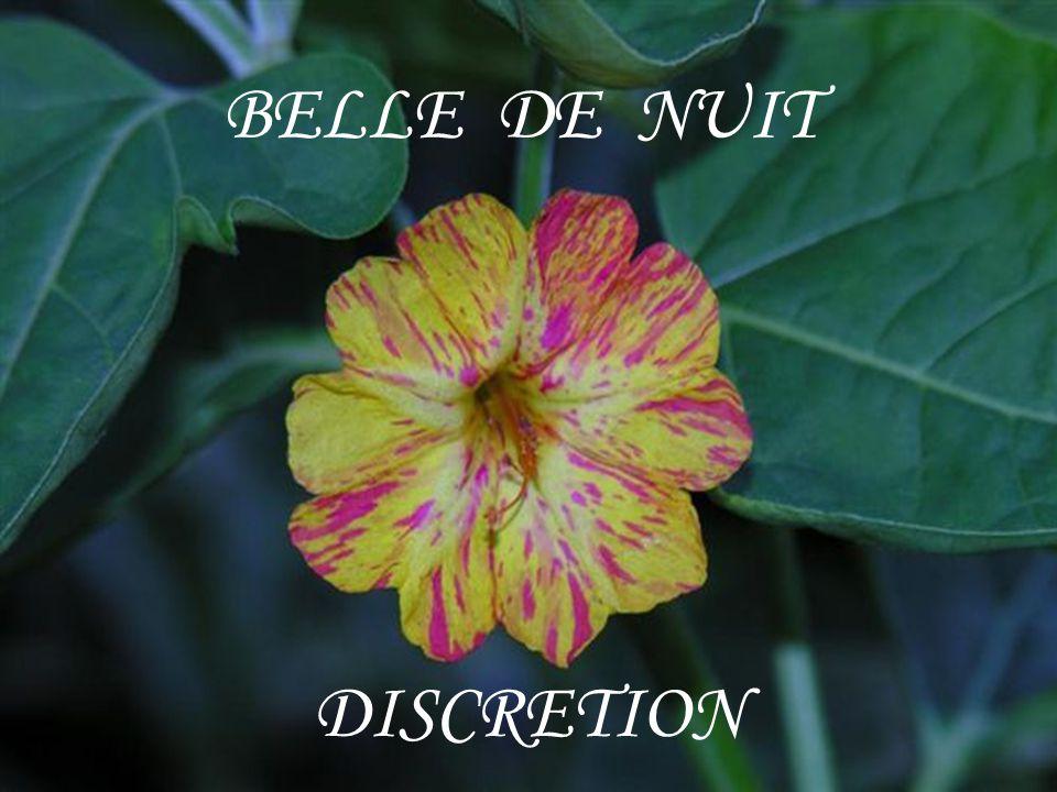 BELLE DE NUIT DISCRETION