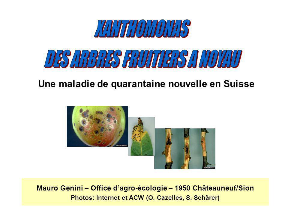 DES ARBRES FRUITIERS A NOYAU