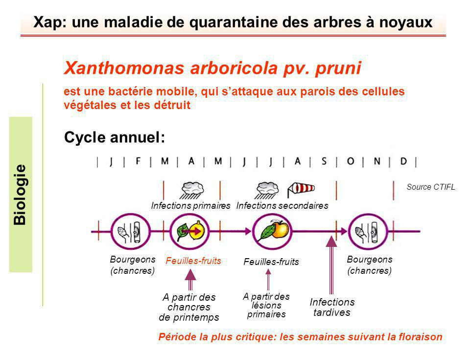 Xanthomonas arboricola pv. pruni