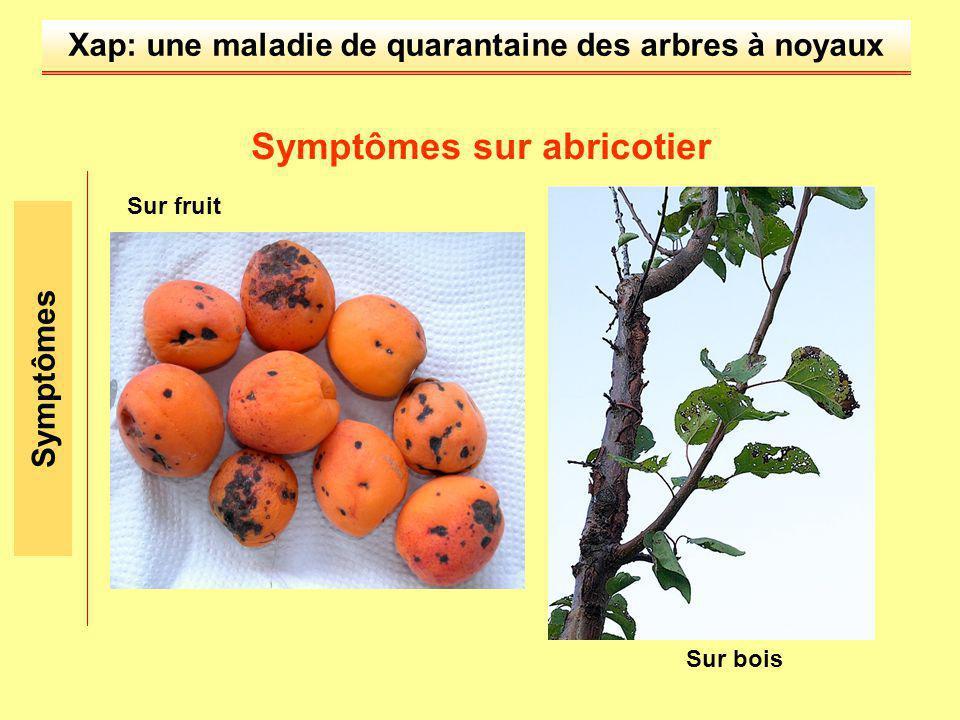 Symptômes sur abricotier