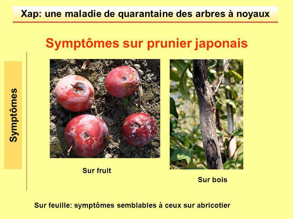 Symptômes sur prunier japonais