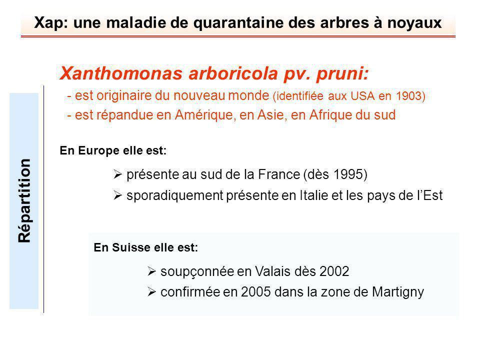 Xanthomonas arboricola pv. pruni: