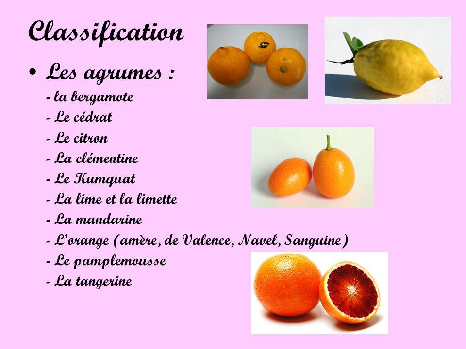 Classification Les agrumes : - la bergamote - Le cédrat - Le citron