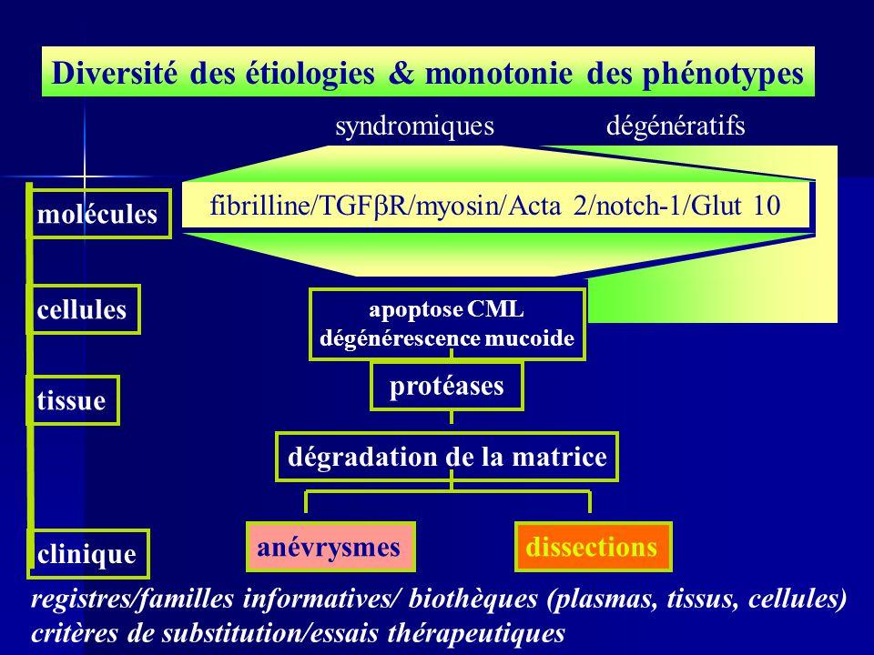 dégénérescence mucoide dégradation de la matrice
