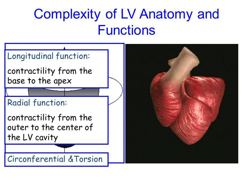 Complexity of LV Anatomy and Functions