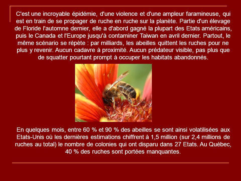 C est une incroyable épidémie, d une violence et d une ampleur faramineuse, qui est en train de se propager de ruche en ruche sur la planète. Partie d un élevage de Floride l automne dernier, elle a d abord gagné la plupart des Etats américains, puis le Canada et l Europe jusqu à contaminer Taiwan en avril dernier. Partout, le même scénario se répète : par milliards, les abeilles quittent les ruches pour ne plus y revenir. Aucun cadavre à proximité. Aucun prédateur visible, pas plus que de squatter pourtant prompt à occuper les habitats abandonnés.