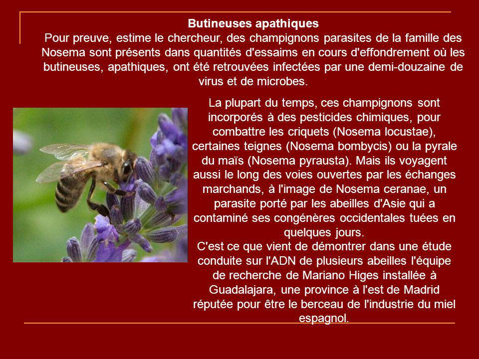 Butineuses apathiques