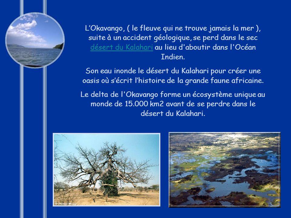 L'Okavango, ( le fleuve qui ne trouve jamais la mer ), suite à un accident géologique, se perd dans le sec désert du Kalahari au lieu d aboutir dans l Océan Indien.