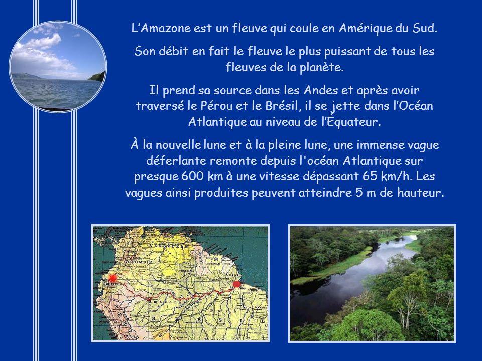 L'Amazone est un fleuve qui coule en Amérique du Sud.