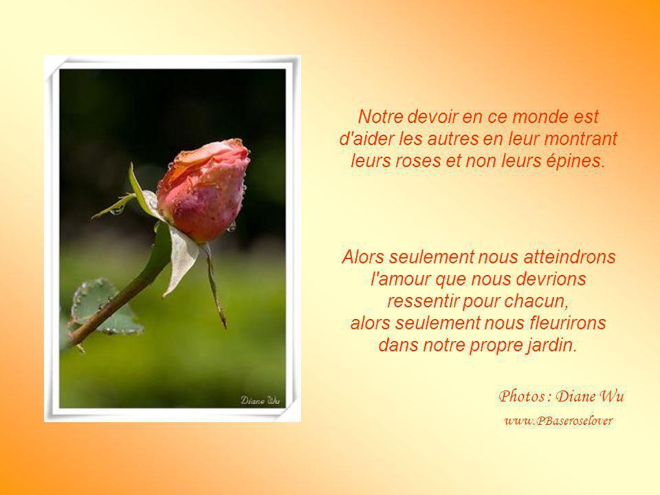 Notre devoir en ce monde est d aider les autres en leur montrant leurs roses et non leurs épines.