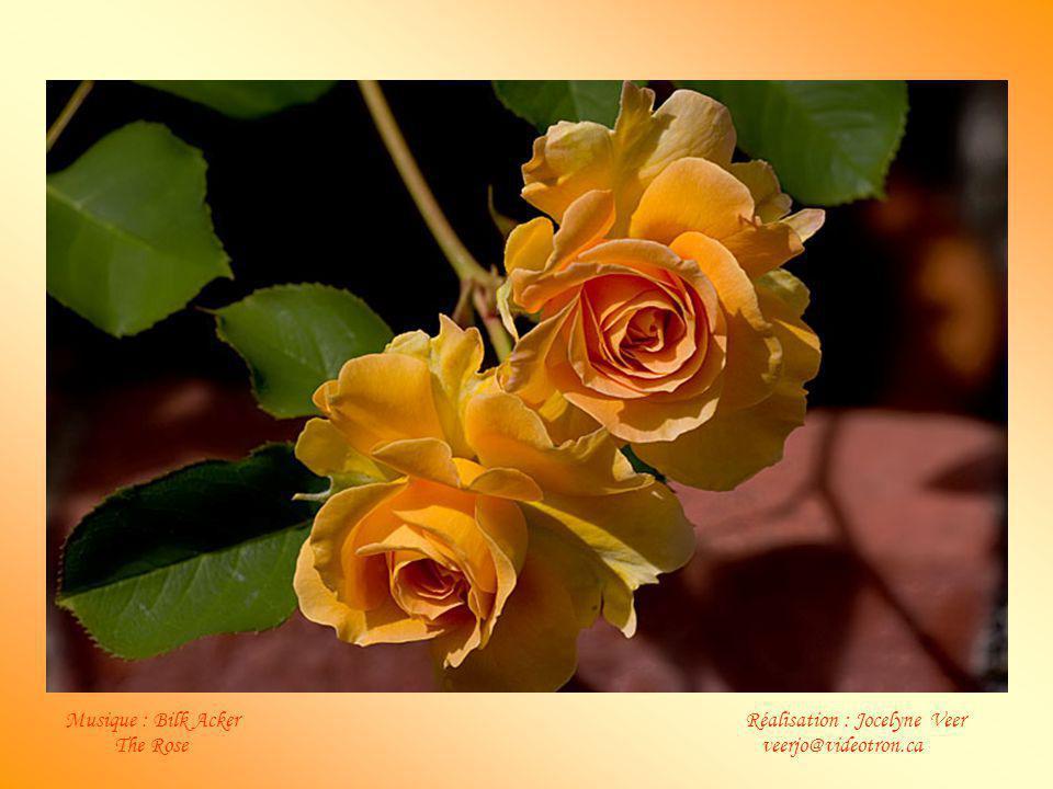 Musique : Bilk Acker Réalisation : Jocelyne Veer The Rose veerjo@videotron.ca