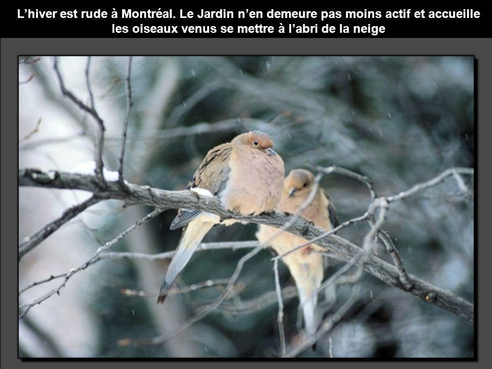 L'hiver est rude à Montréal