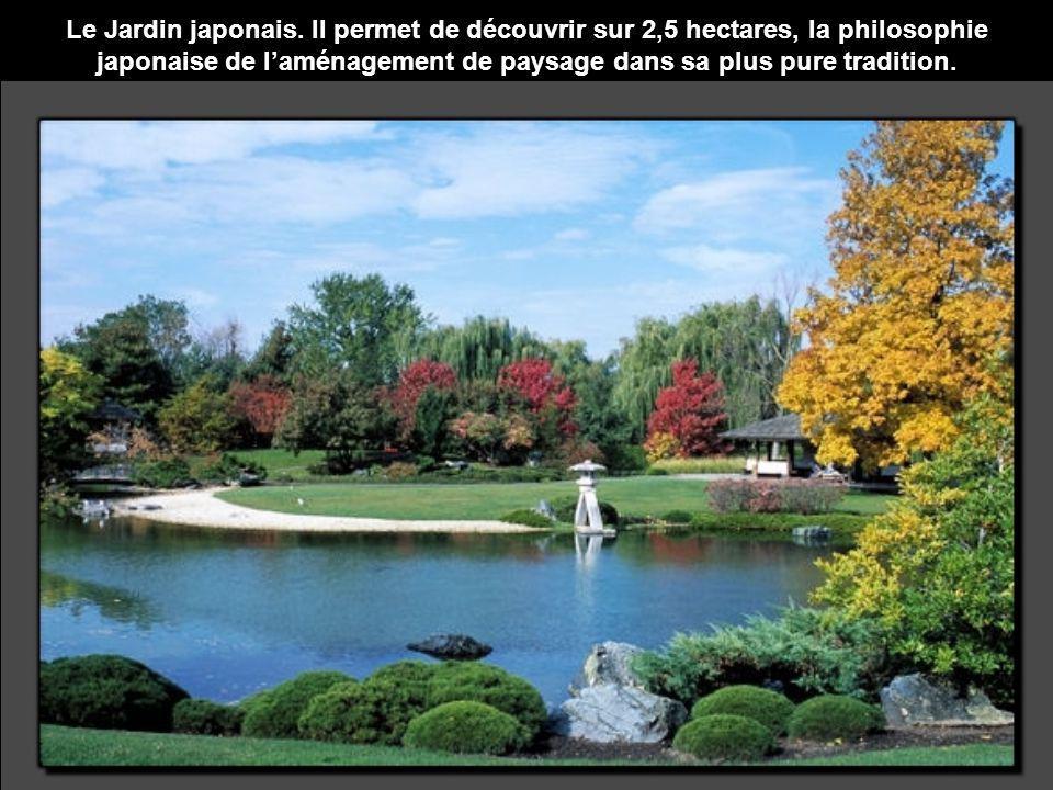Le Jardin japonais.