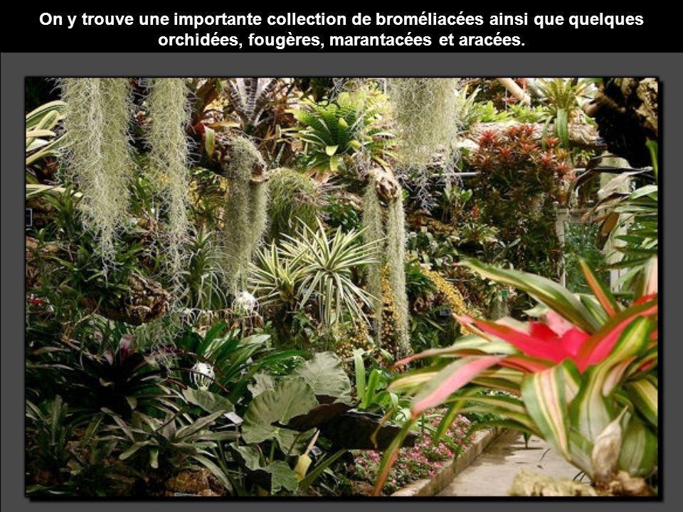 On y trouve une importante collection de broméliacées ainsi que quelques orchidées, fougères, marantacées et aracées.